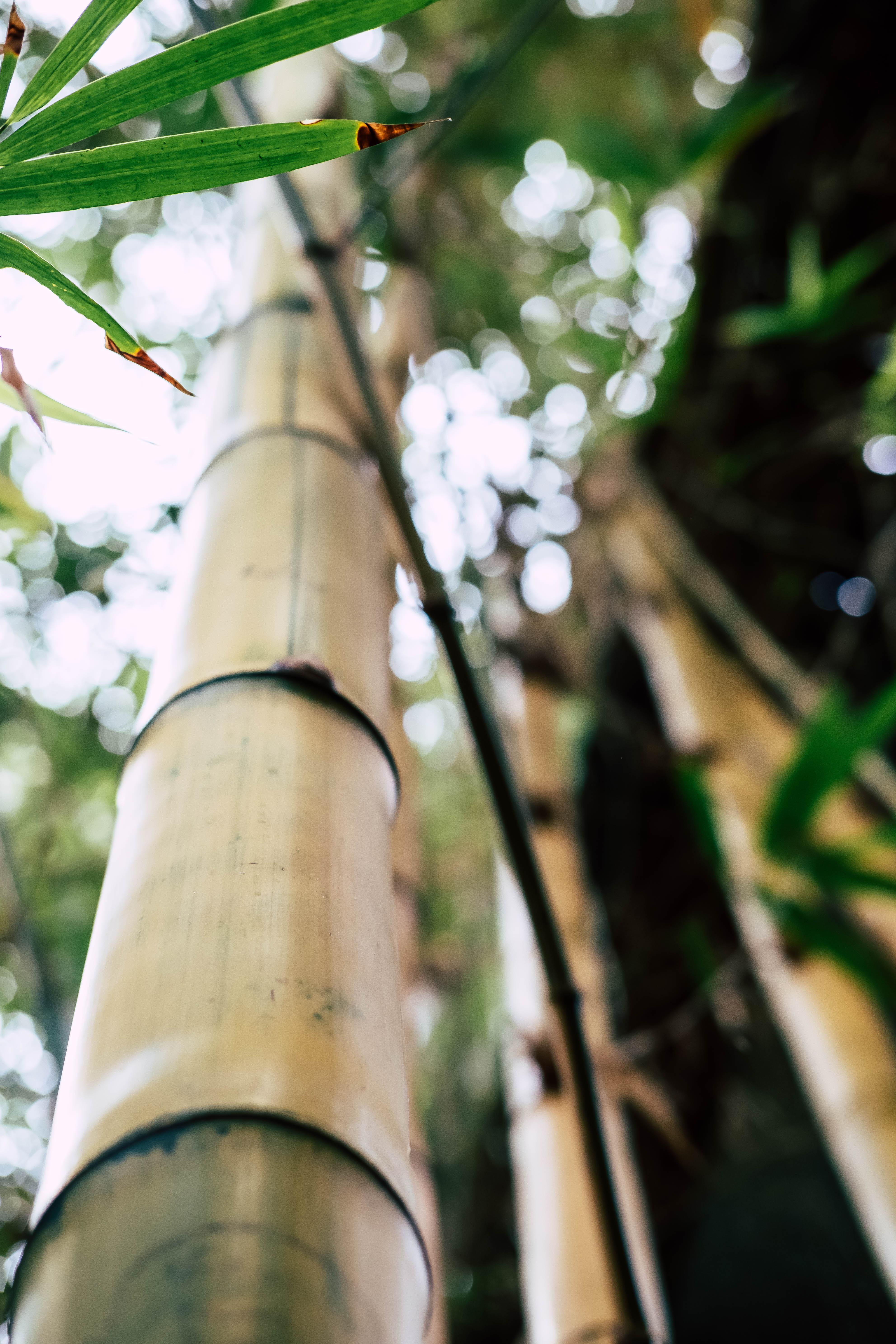 Blurry Bambus